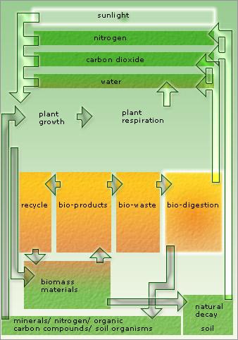 the bio-digestive system